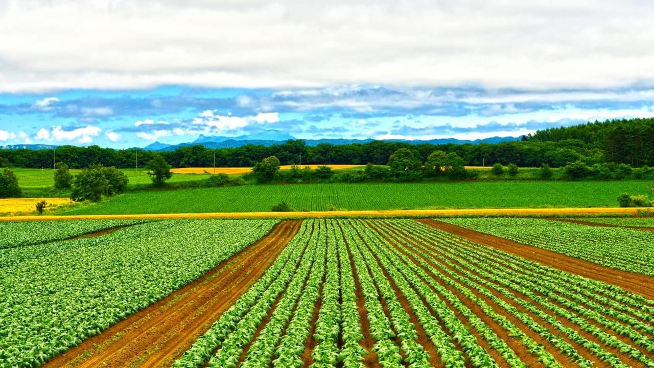 農業の参考画像